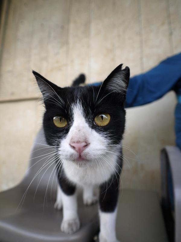 駅ホームのベンチと白黒猫2