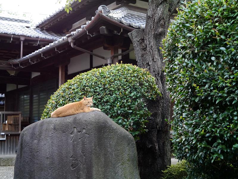 石碑と茶トラ猫1