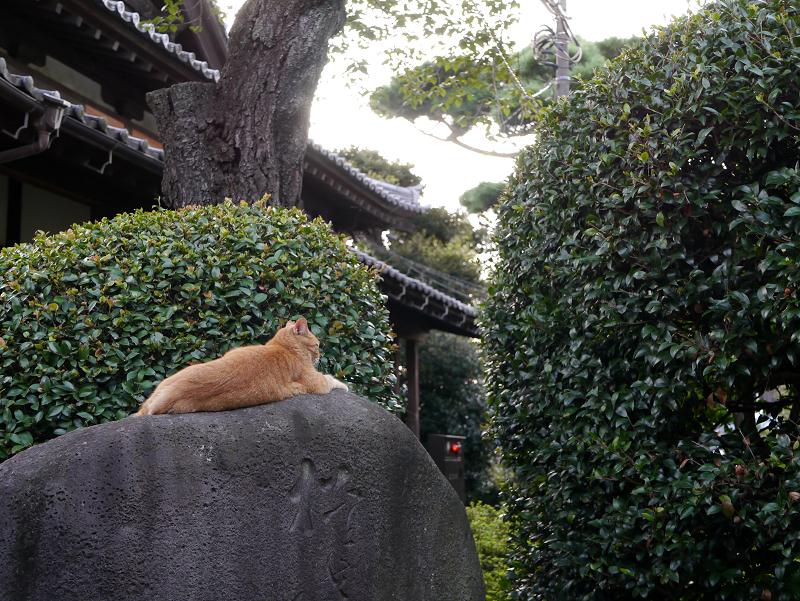 石碑と茶トラ猫2