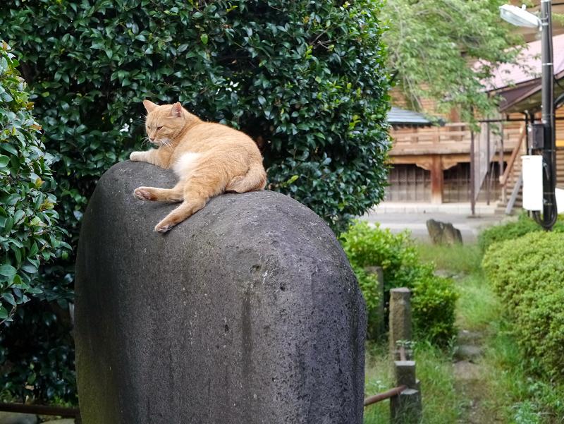 石碑と茶トラ猫3