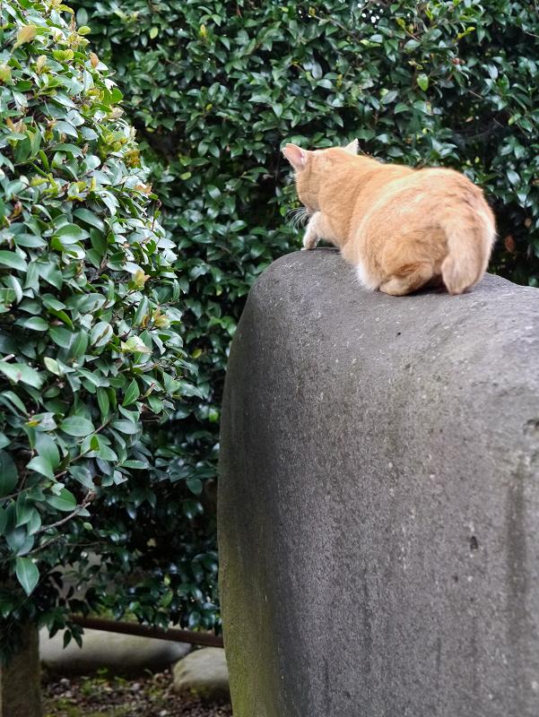石碑と茶トラ猫4