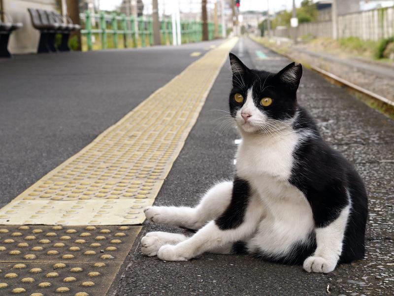 ホームでカキカキする黒白猫3