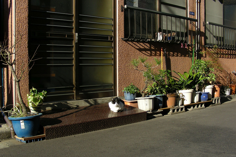 陽が当たる玄関前の白黒猫1