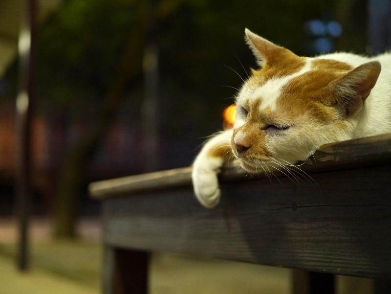 夕暮に通路ベンチで寝ている茶白猫2