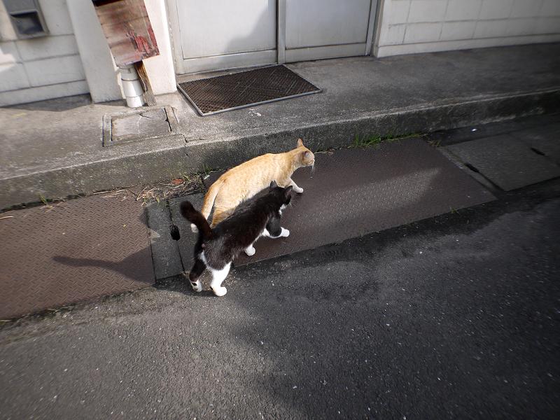 駅ナカ猫2匹1