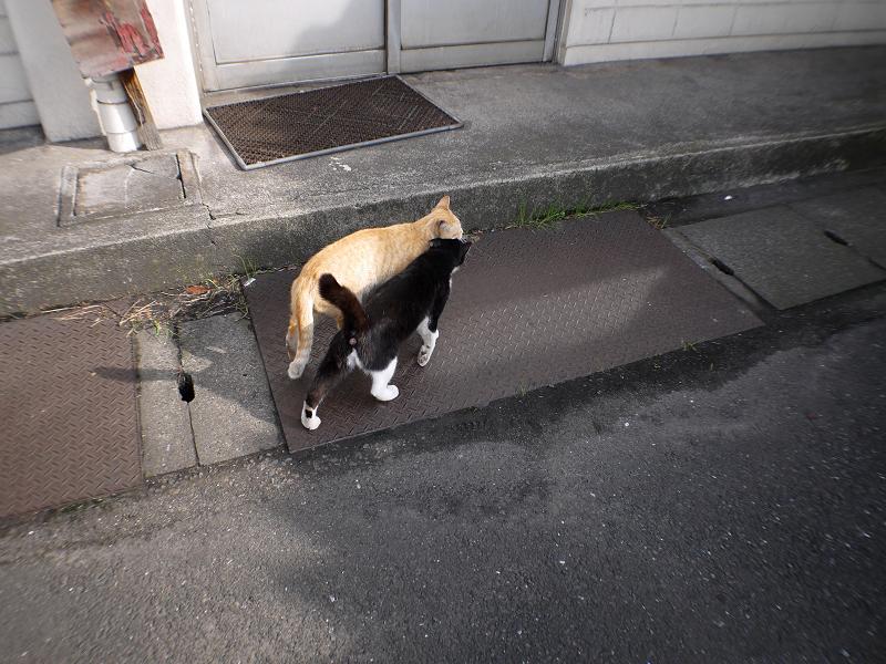 駅ナカ猫2匹2