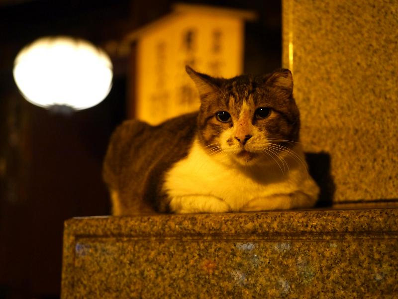 門の石碑に乗ってるキジ白猫1