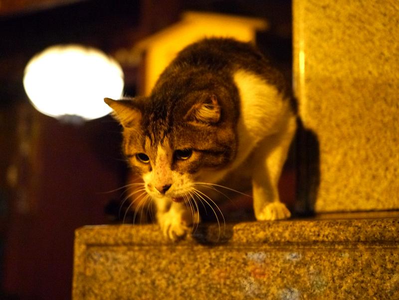 門の石碑に乗ってるキジ白猫2