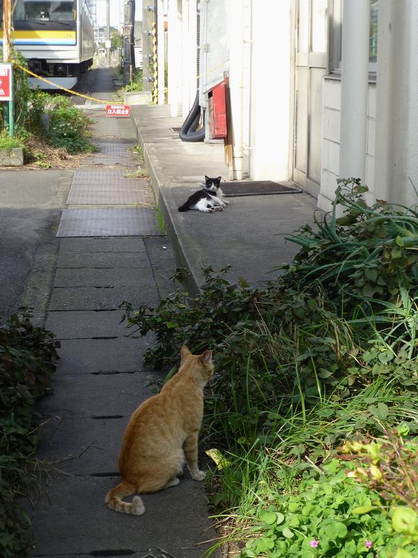 駅ナカ茶白猫黒白猫