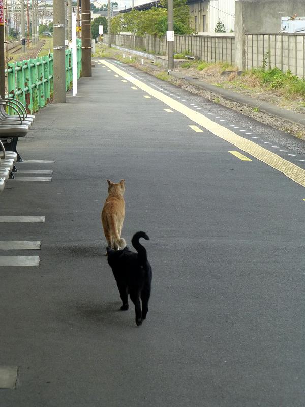 ホームでいちゃつく猫たち1