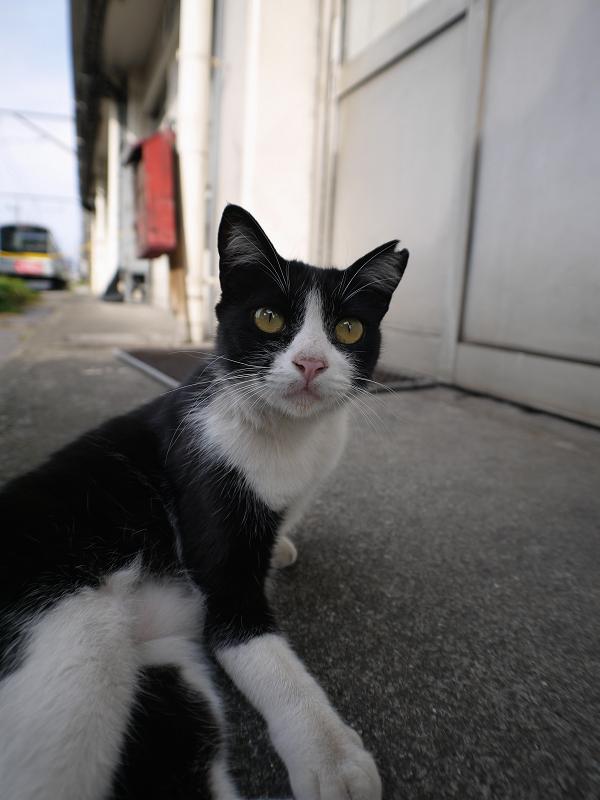 駅ナカ黒白猫