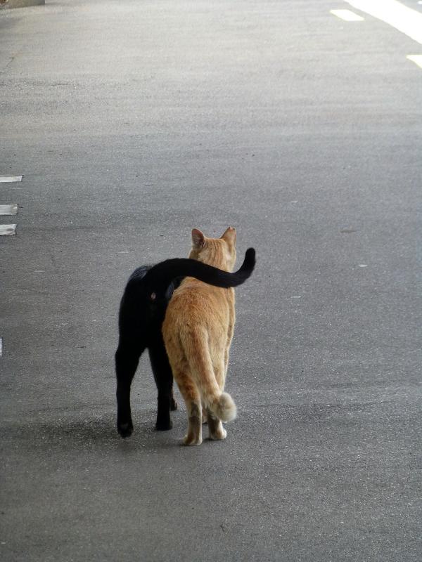 ホームでいちゃつく猫たち2