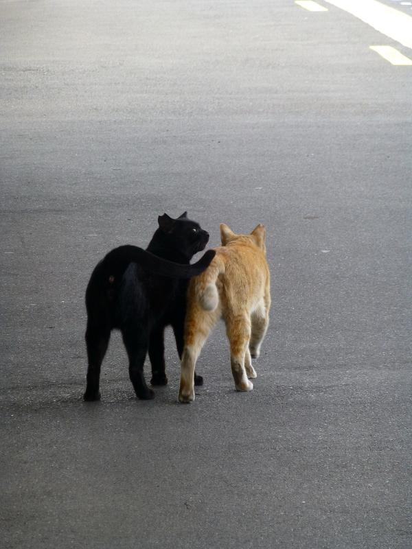 ホームでいちゃつく猫たち3