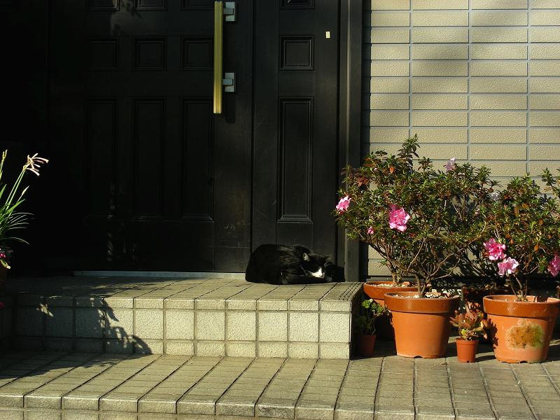 民家玄関黒白猫1