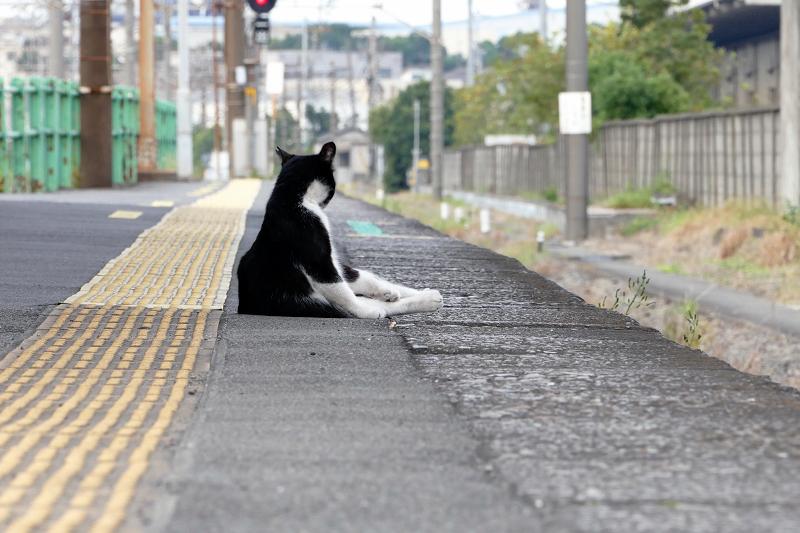 ホームで毛繕い中の黒白猫2