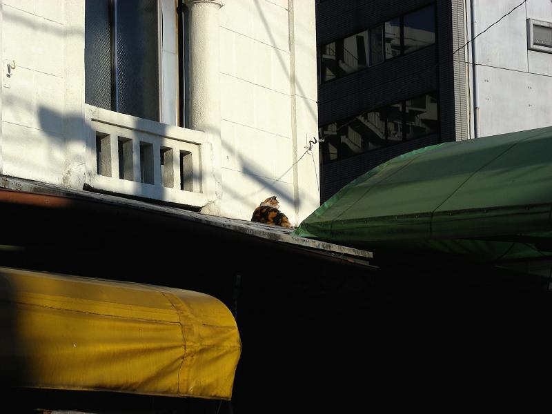 レトロ風の壁と三毛猫1