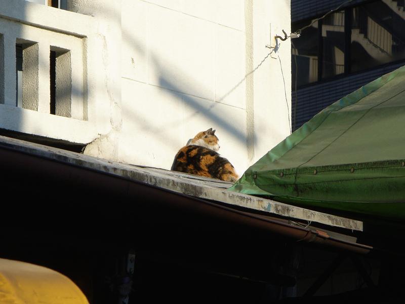 レトロ風の壁と三毛猫2