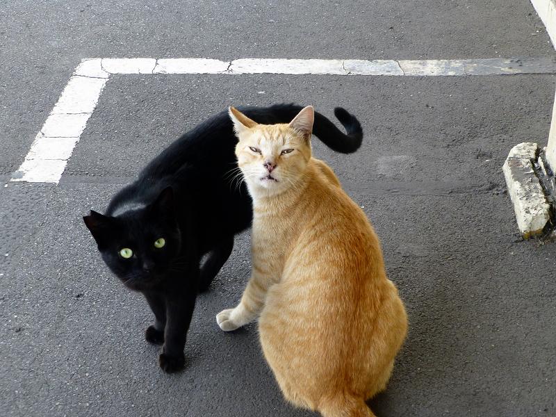 ホームで仲良しな茶トラ猫と黒猫1