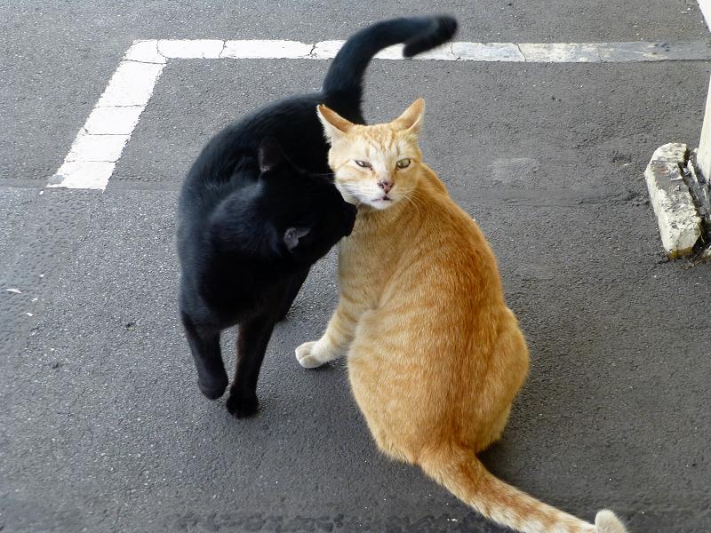 ホームで仲良しな茶トラ猫と黒猫2