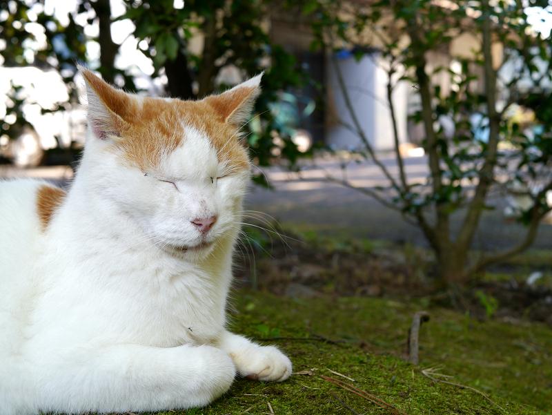 庭園で出会った大柄な猫たち1