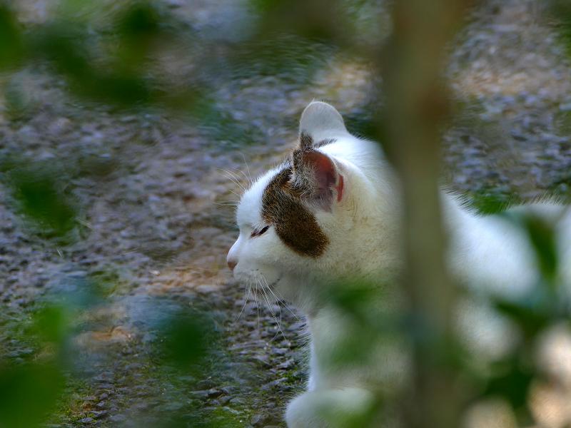 庭園で出会った大柄な猫たち3