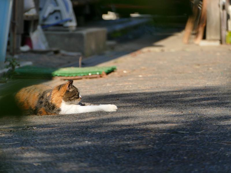 庭園で出会った大柄な猫たち4