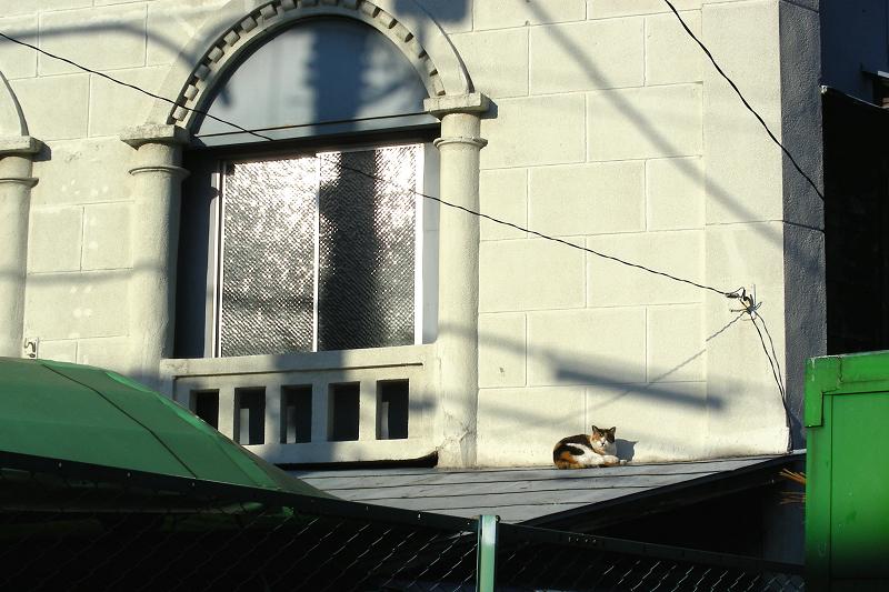 レトロ風の壁の影と三毛猫1