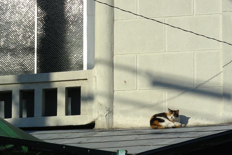 レトロ風の壁の影と三毛猫2