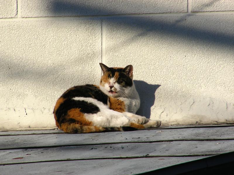 レトロ風の壁の影と三毛猫3