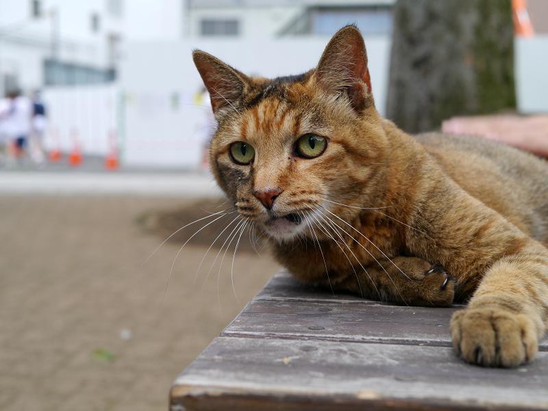 ベンチの上のサビ柄猫2