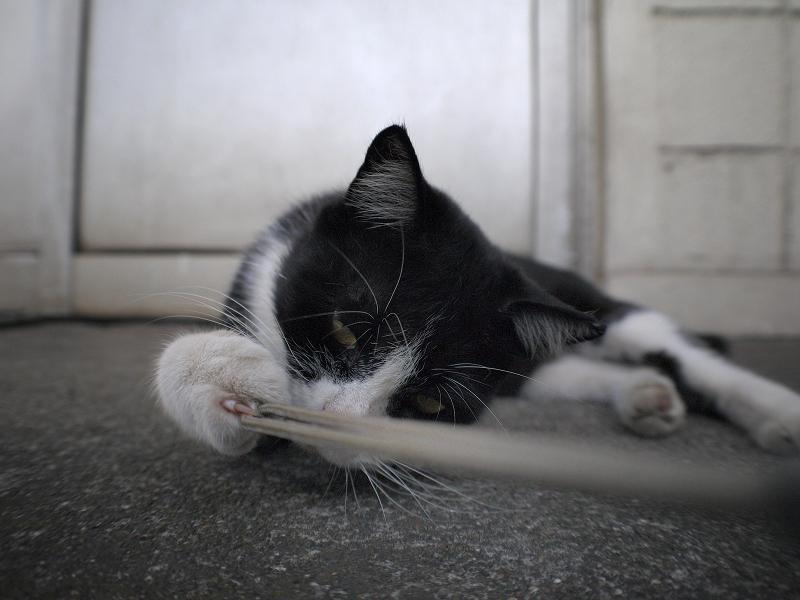 ストラップを引っ張る黒白猫1