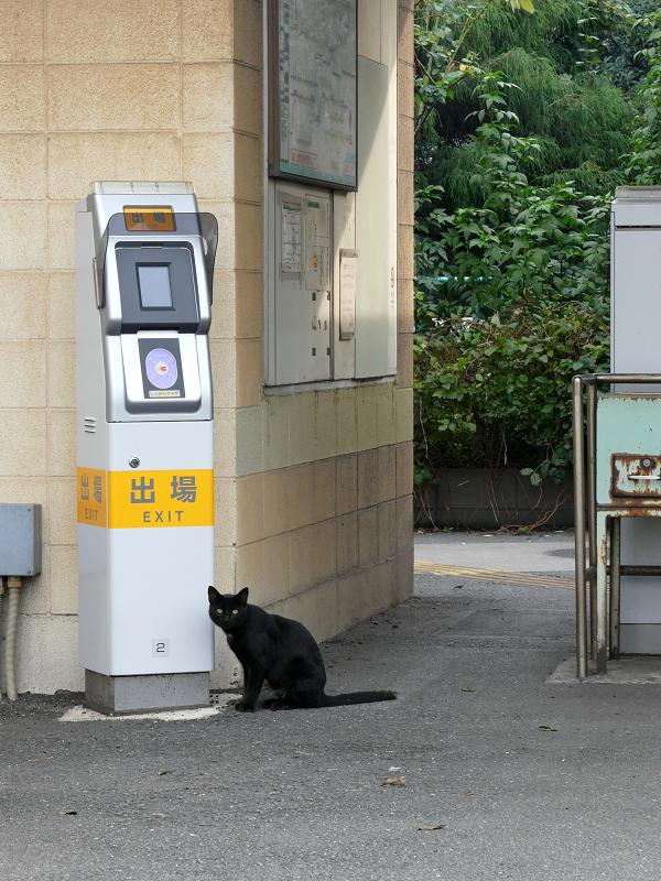 改札口にいた黒猫