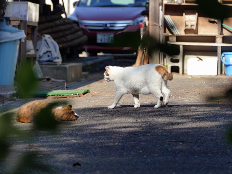 資材置き場の猫たち1