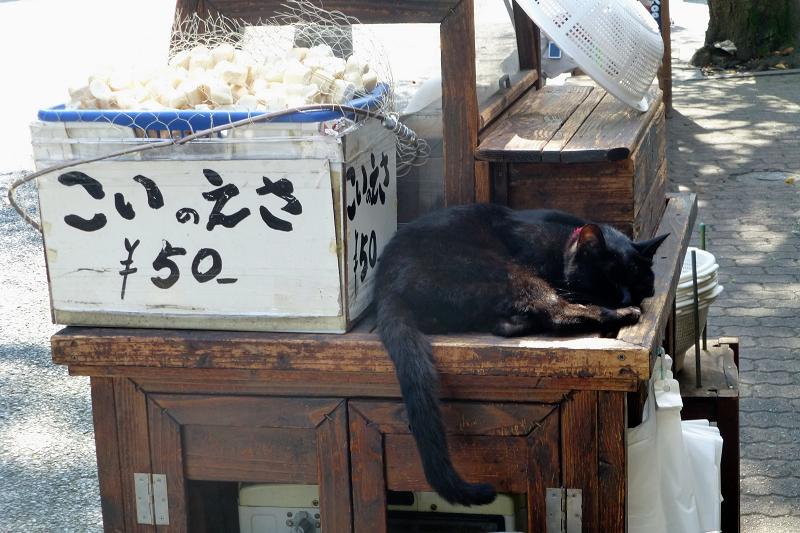 こいのえさと黒猫1