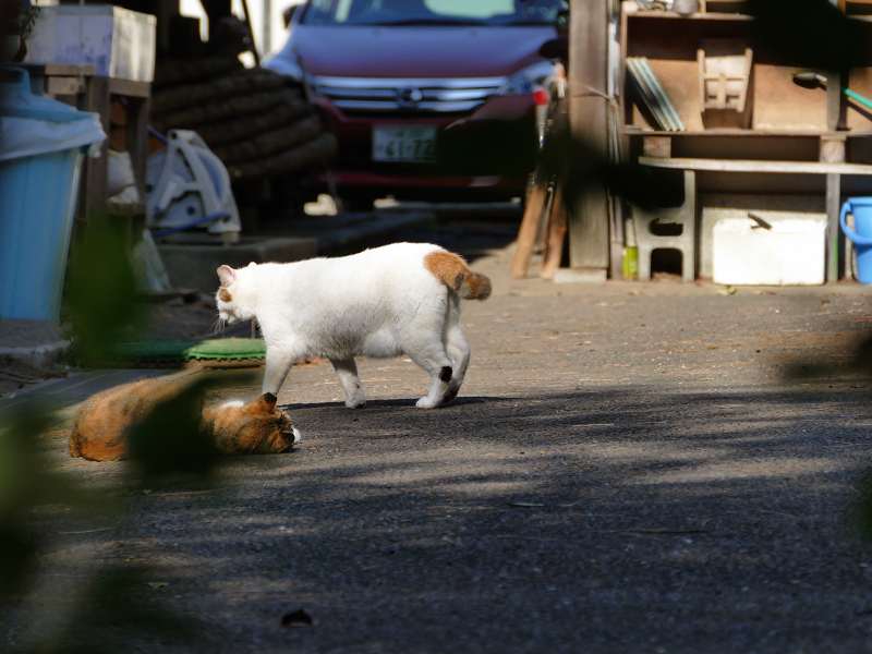 資材置き場の猫たち2