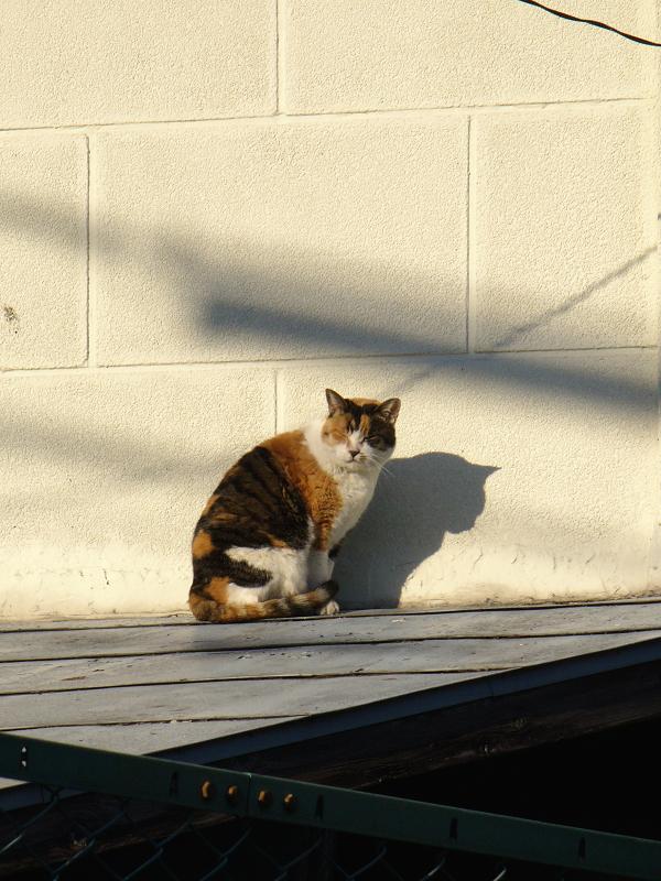ベージュの壁と三毛猫1