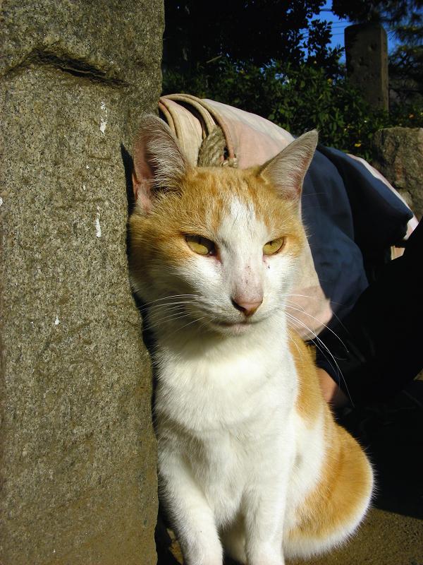 手すり石柱と茶白猫2