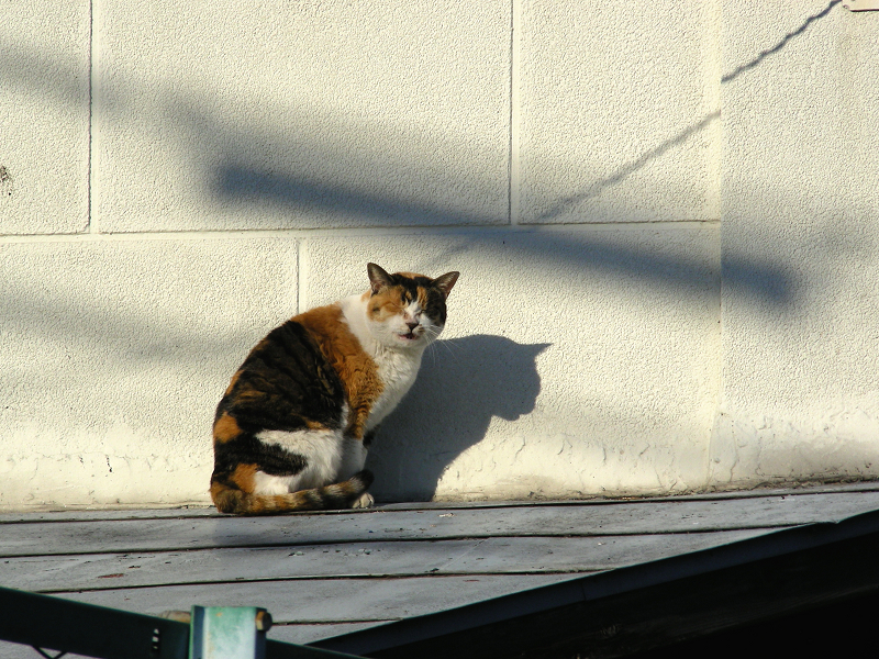 ベージュの壁と三毛猫2