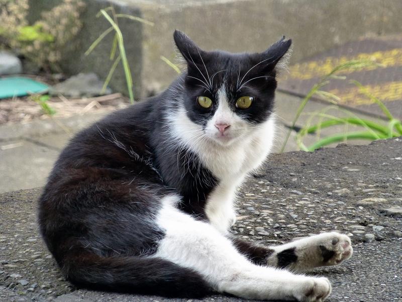 座りながら何かを見ている黒白猫2