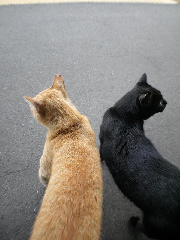 ホームでシンメトリな猫たち2