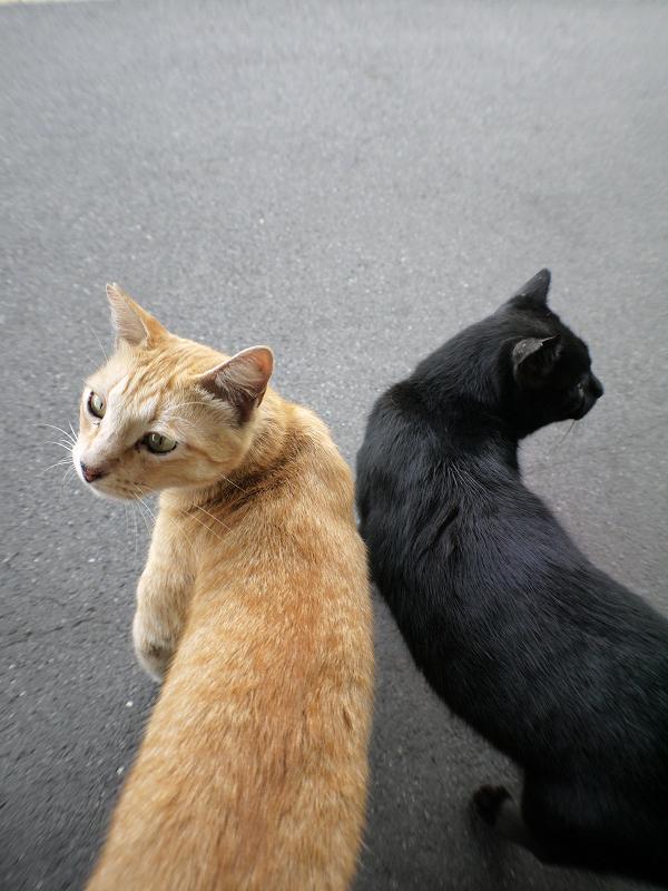 ホームでシンメトリな猫たち3