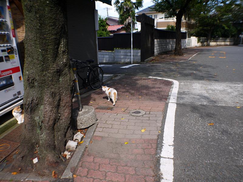路地を走る白茶猫1