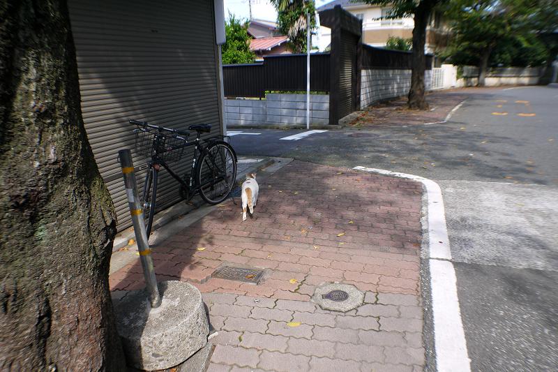 路地を走る白茶猫2