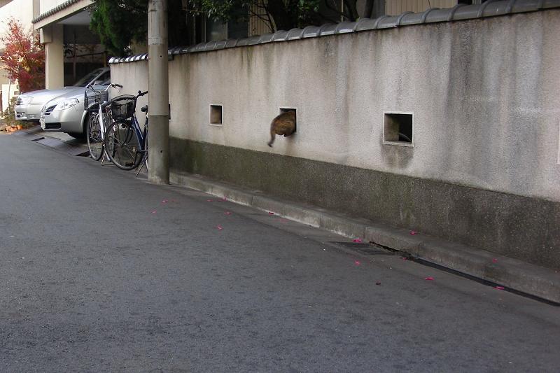 民家塀の飾り窓とサビ柄猫1