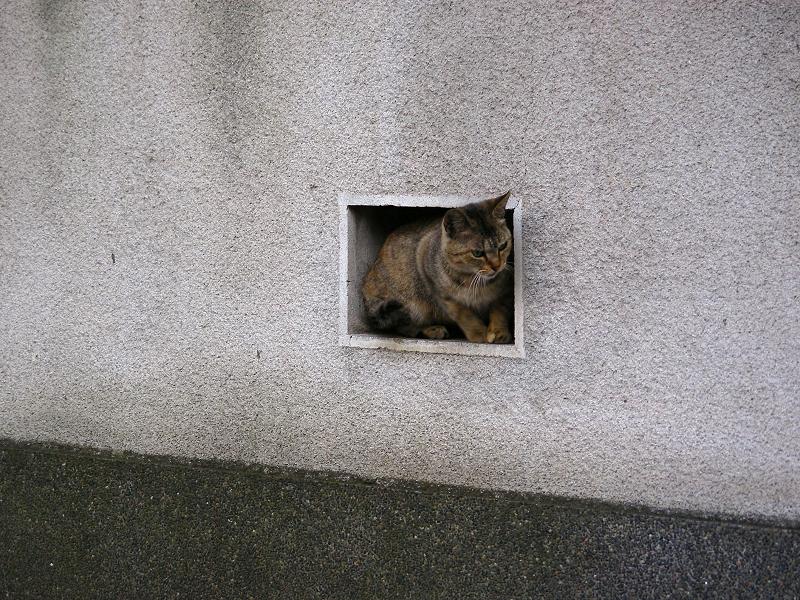 民家塀の飾り窓とサビ柄猫2