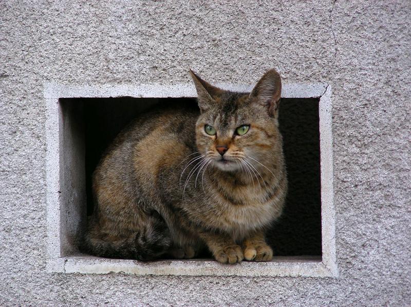 民家塀の飾り窓とサビ柄猫3