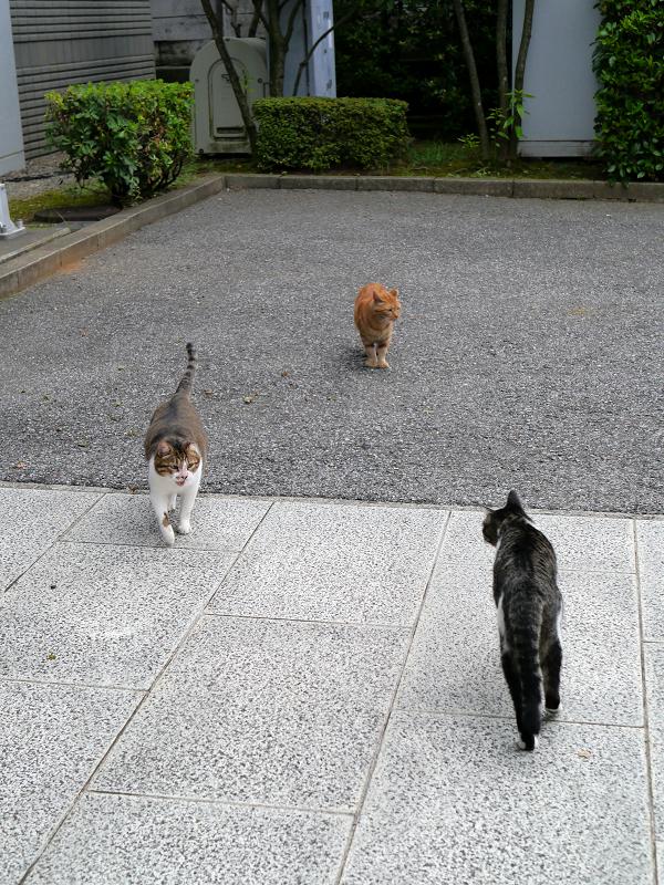 すれ違う3匹の猫たち1
