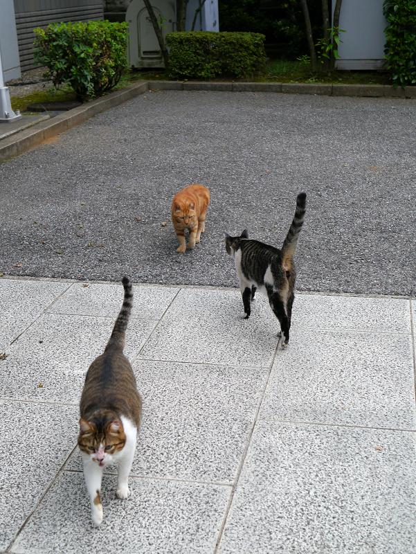 すれ違う3匹の猫たち2