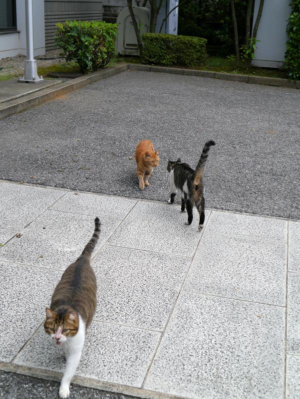 すれ違う3匹の猫たち3