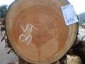 桧58cm木目